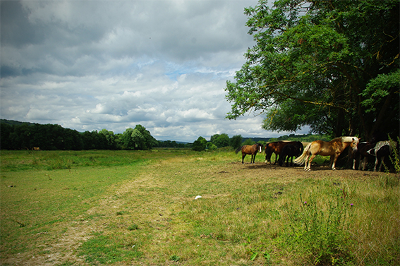 Parc chevaux