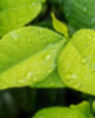 leaf-1001679_1920.jpg