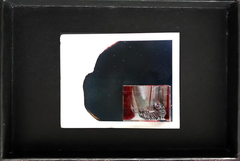 "Series X-Pola ""Tigris"" 2019 8/10cm mounted Plexiglass on Polaroid Edition 1/1 NIS 1,000 per object Sold out"