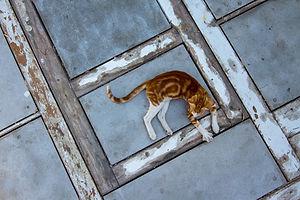 קטן חתול.jpg