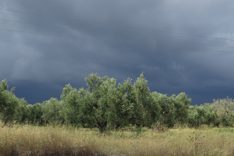 'olive trees', 2018 In nature we know you series archival pigment print 50/70cm, edition 2/5 2000$+vat,framed