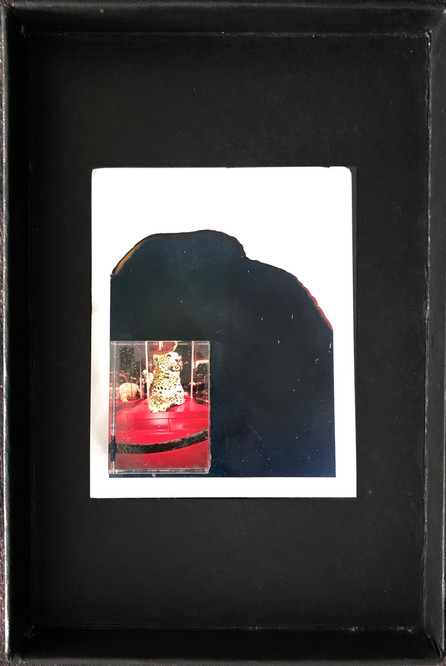 """Series X-Pola """"Tiger"""" 2019 8/10cm mounted Plexiglass on Polaroid Edition 1/1 NIS 1,000 per object Sold out"""
