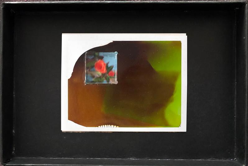 "Series X-Pola ""Flowers"" 2019 8/10cm mounted Plexiglass on Polaroid Edition 1/1 NIS 1,000 per object"