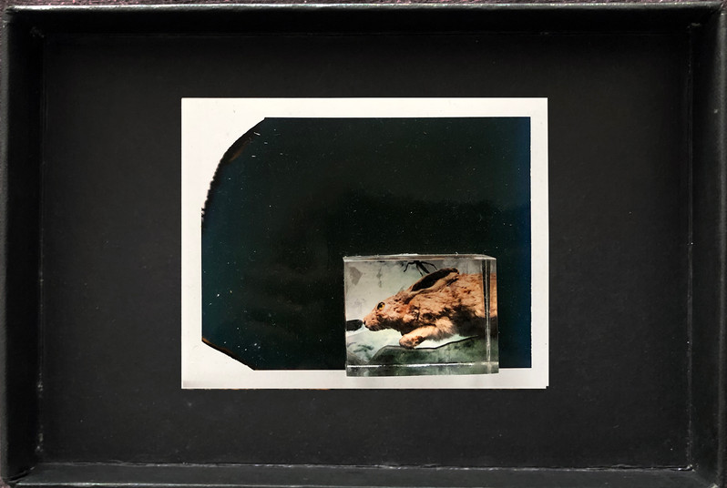 "Series X-Pola ""Rabbit"" 2019 8/10cm mounted Plexiglass on Polaroid Edition 1/1 NIS 1,000 per object"