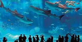 ちゅら海水族館,沖縄観光,沖縄リゾート,沖縄移住
