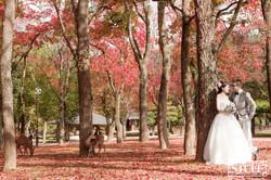 Japan Pre-wedding 047