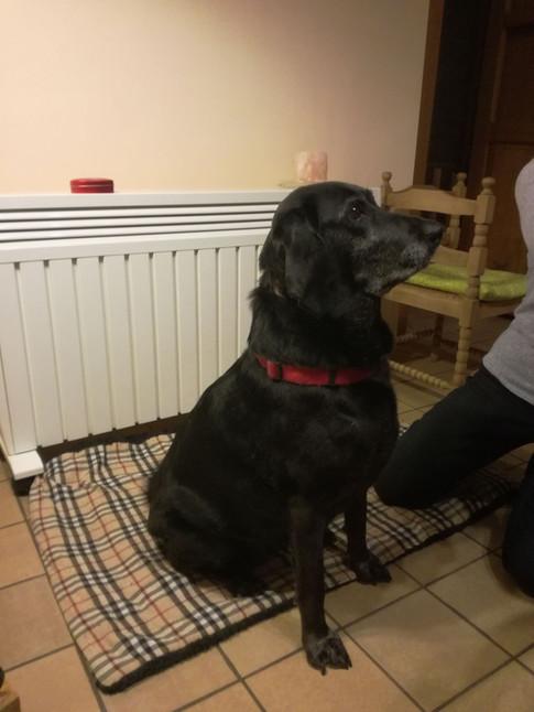 chien croisé noir