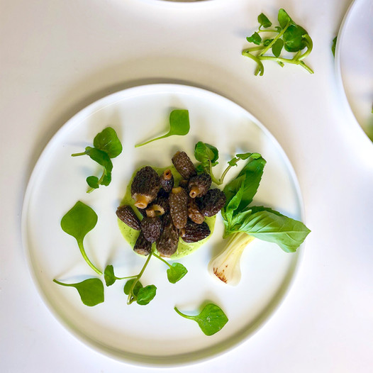 Morilles au cresson de fontaine, oignon printanier et basilic