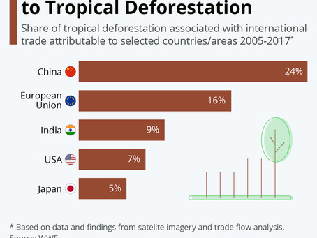 The Biggest Contributors to Tropical Deforestation