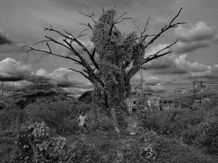 Home_last tree 2015