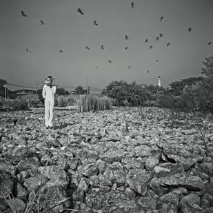 Premonition_Lost field 2006