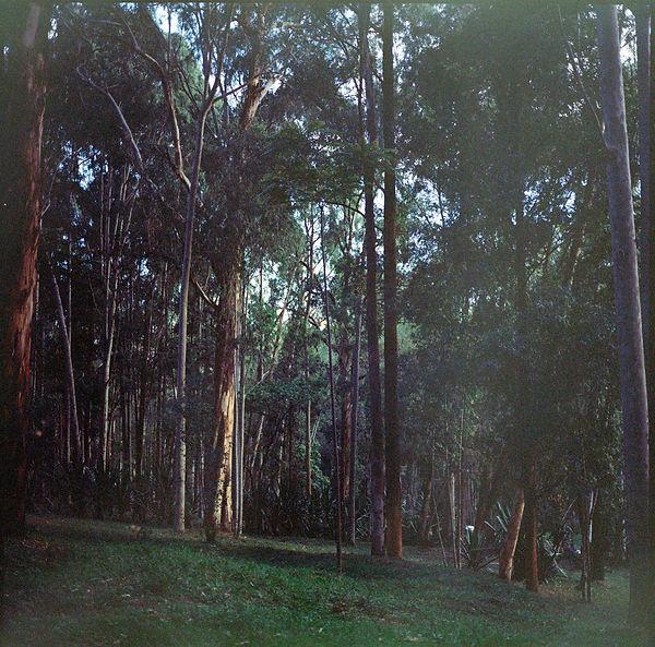 ruanda-13.jpg
