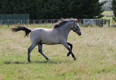 Leo nearly a yearling.jpg