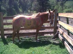 CAMP HORSE 2