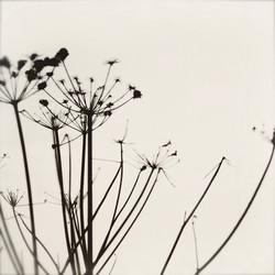 1_thistle_flower_2_edited