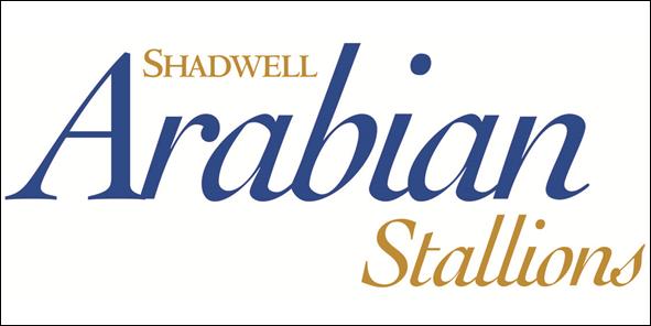 02-Shadwell Arabian Stallions-2
