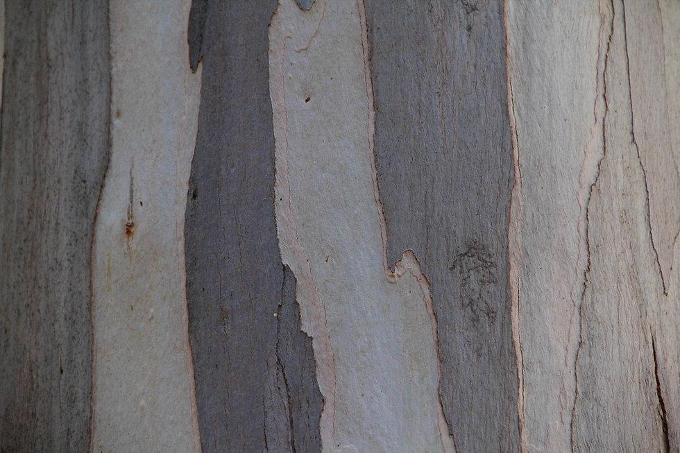 eucalyptus wood texture bark paper woode