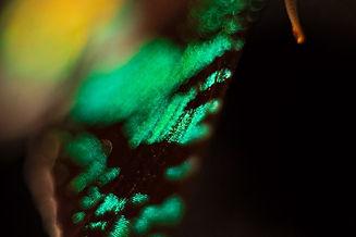 fotograf_abstrakt_03-.jpg