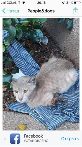 Кот Кинамон חתול קינמון