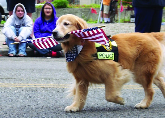 Golden Retriever police search and rescu