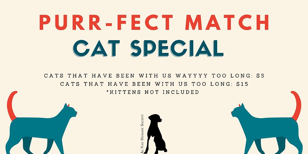 Purr-fect Match Cat Special