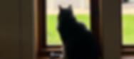 window_edited_edited.png
