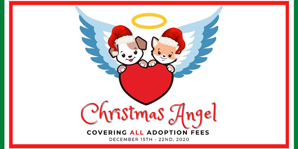 Christmas Angel - Adoption Fees Covered