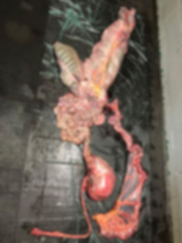 Digestive system.jpg