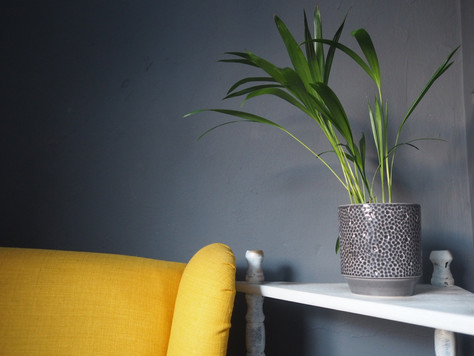 Six Reasons Why House Plants Are Good For You
