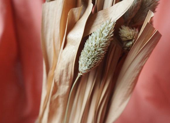 Mini Dried Phalaris Canary Grass Bunch in Terracotta Pot