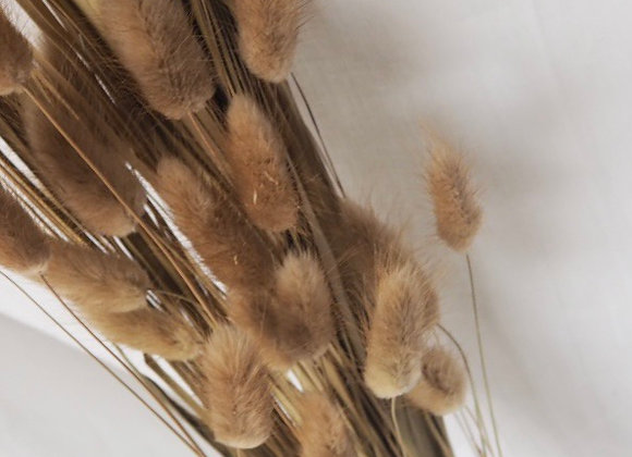 Dried Bunny Tails Tall Grass - 90cm