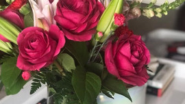 Flowers and Felines