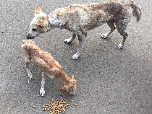 Starving mother dog and pup