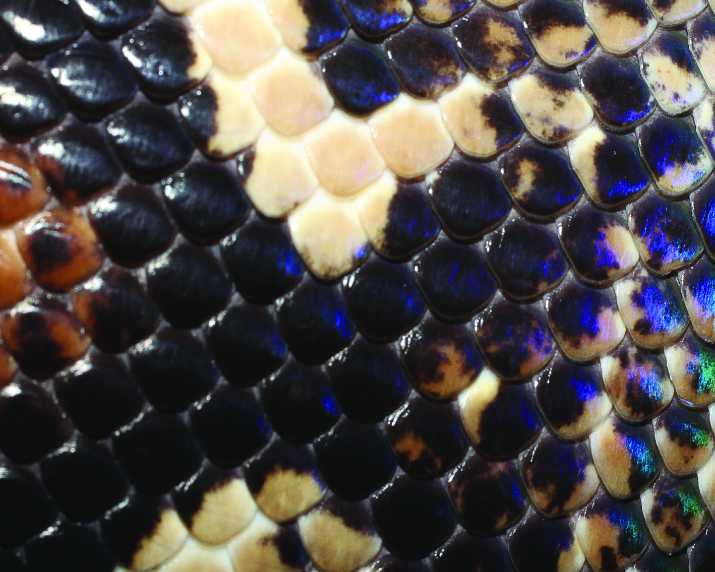 snake skins-03