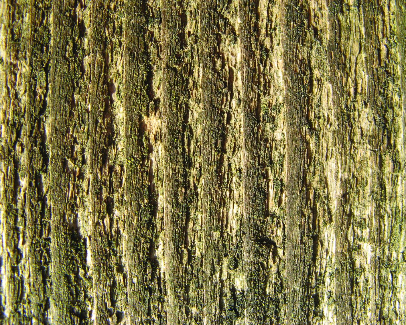 _wood-16