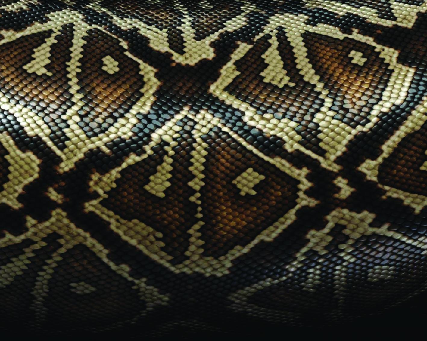 Snake 30-36-01