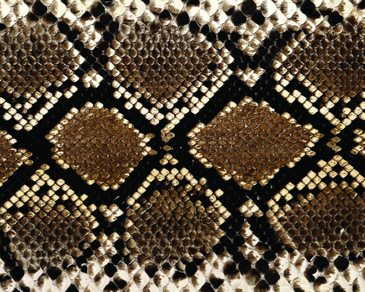 snake skins-19