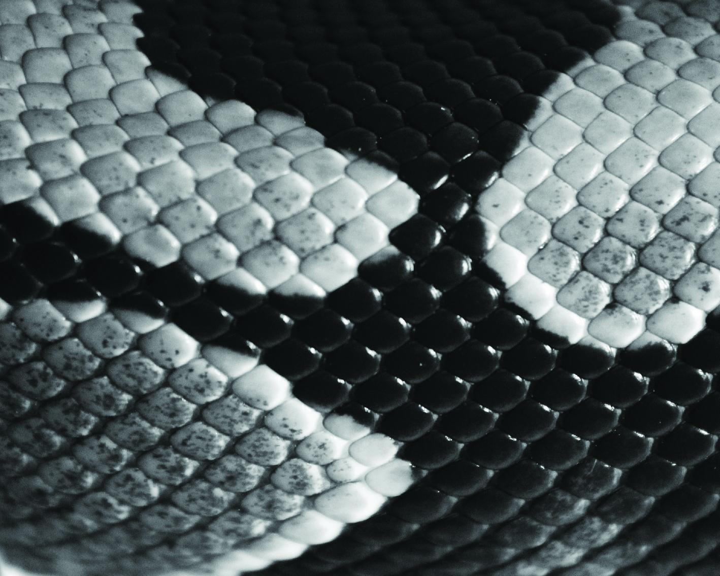 snake skins-11