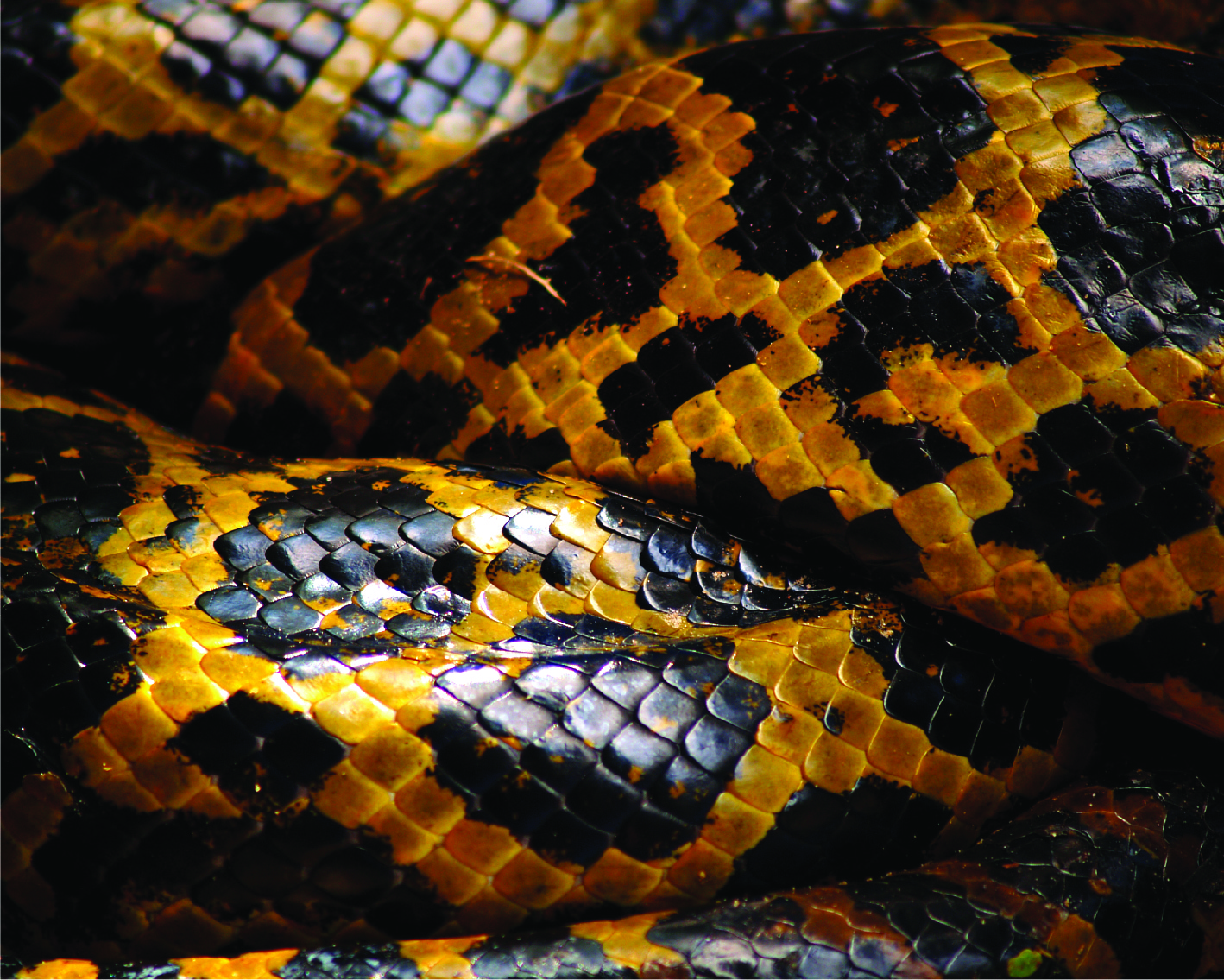 snake skins-22