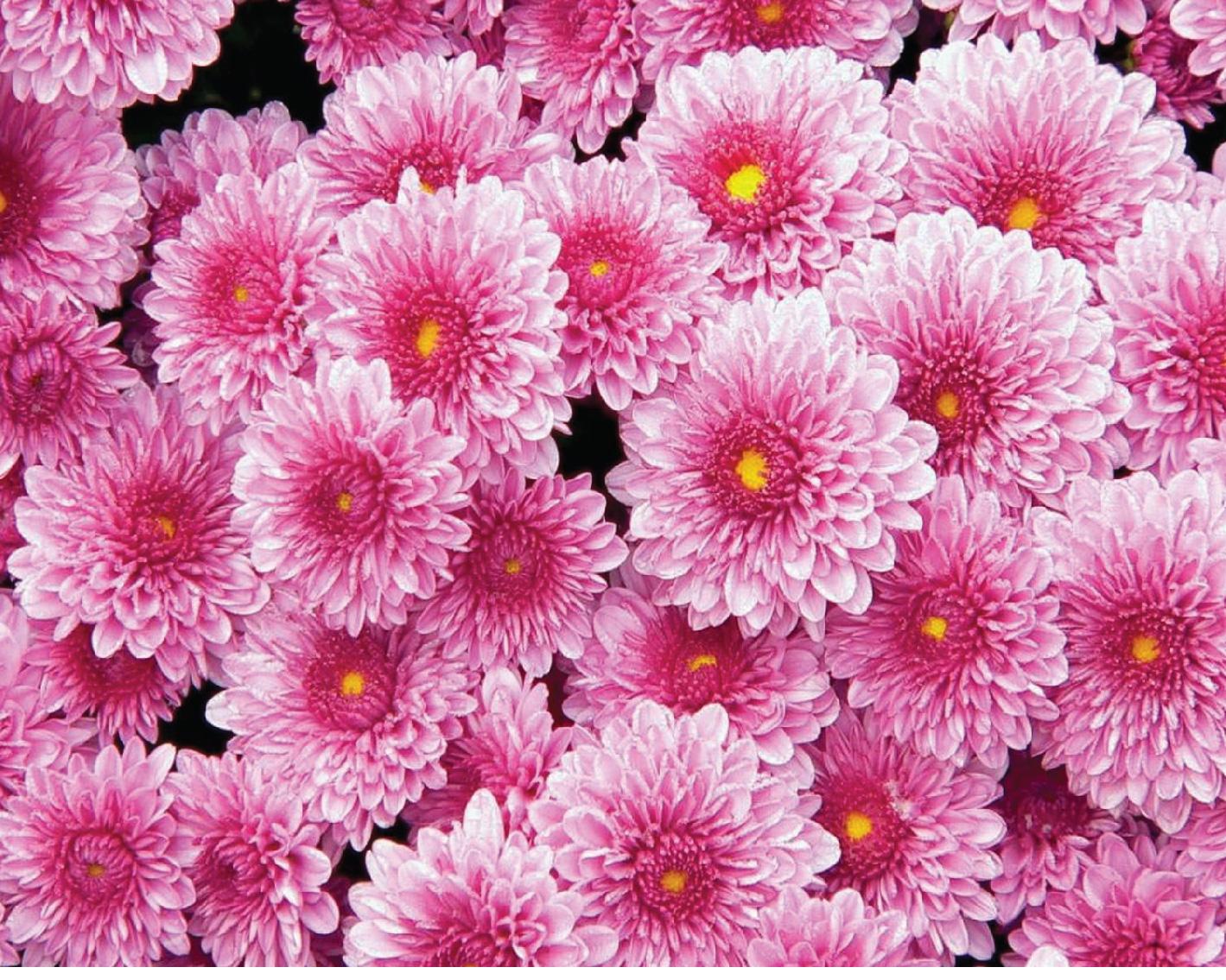Flores-03