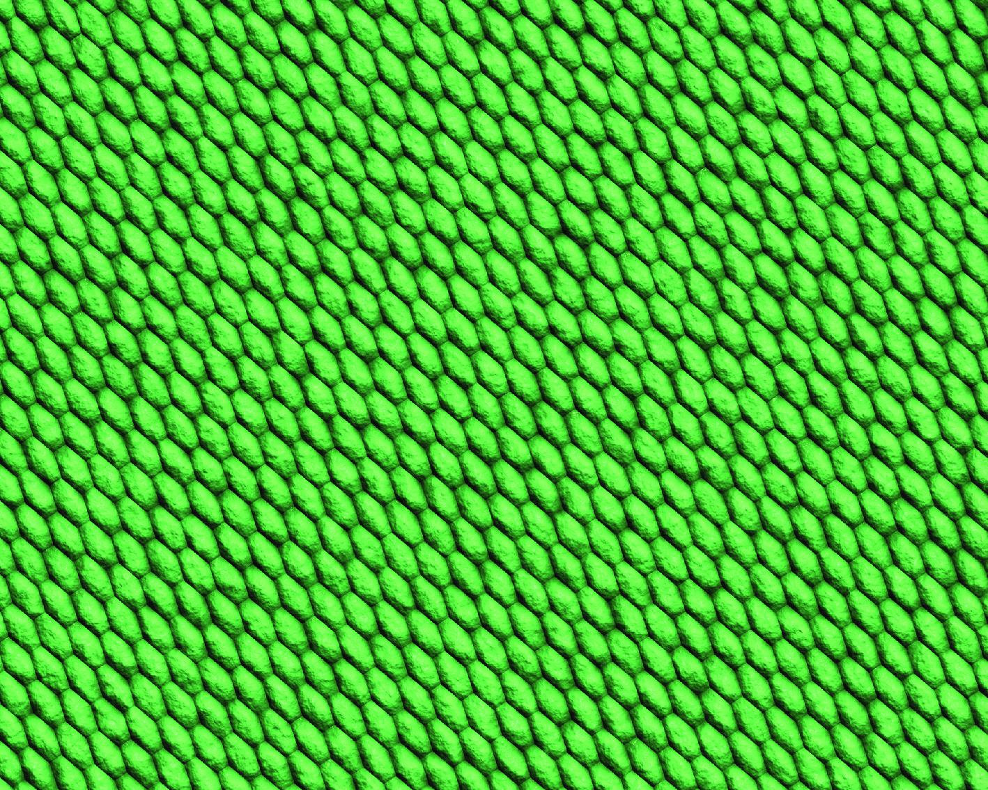 snake skins-12