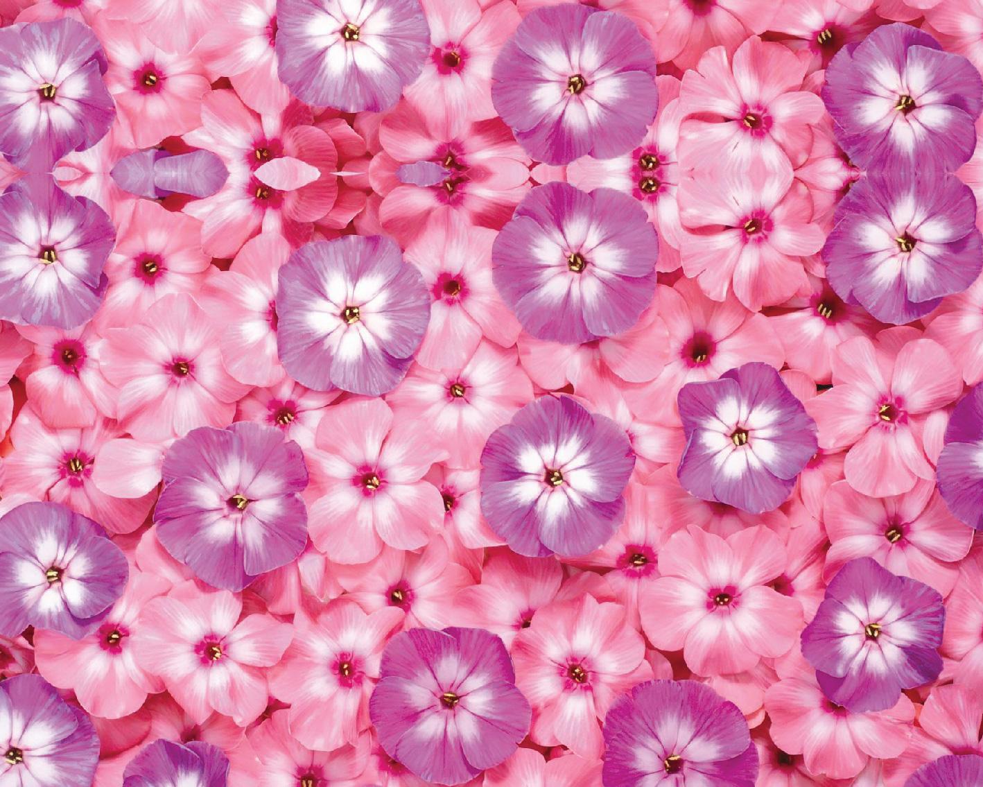 Flores-02