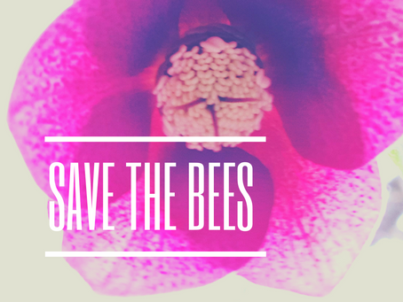 Four ways you can help save the bees