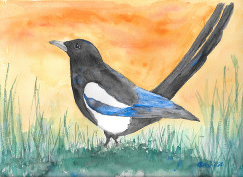 Magpie Moment