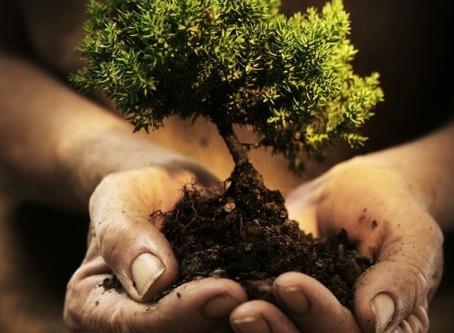 Plantons des arbres!