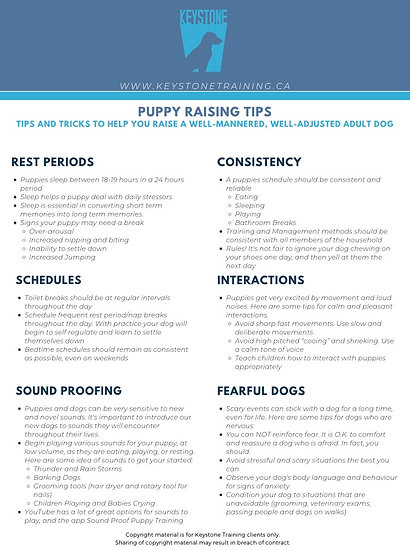 Keystone Puppy Tips and Equipment
