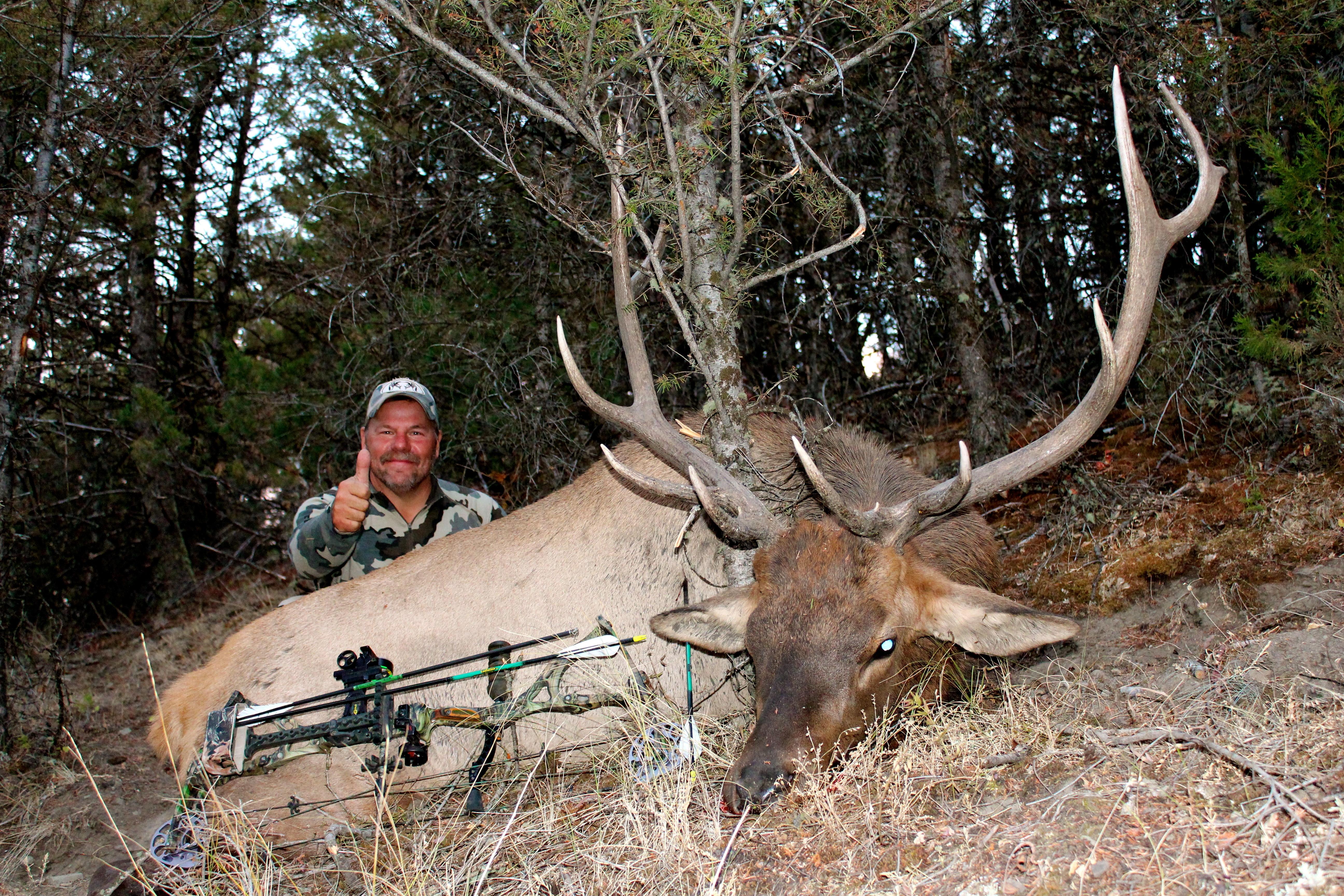 Bull 2012