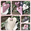 Thumbnail: Rose, dunkle Malve mit hellrosa Herz