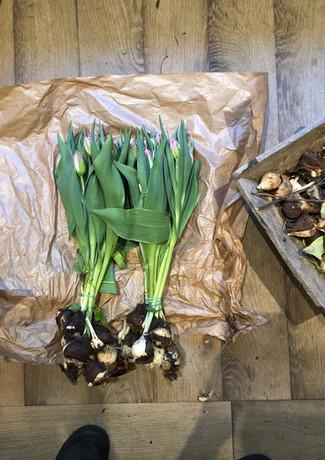 Les tulipes de la region parisienne