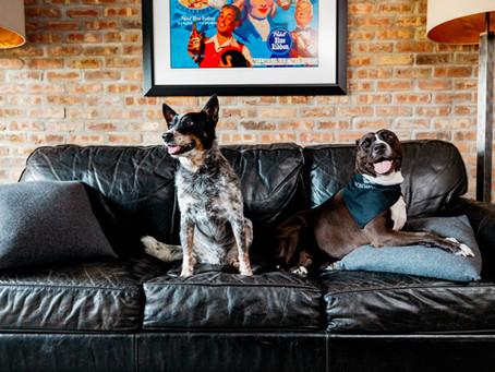The Dog Days of Ironworks Hotel Beloit